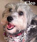 Cleo w name.jpg