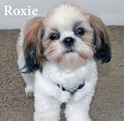 Roxie-w name.jpg