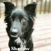 shadow with name.jpg
