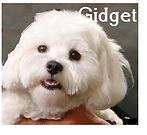 gidget2.jpg