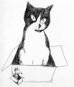 Cat & Rat in a box