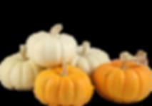 pumpkins-mini-pumpkin-png-500_350.png