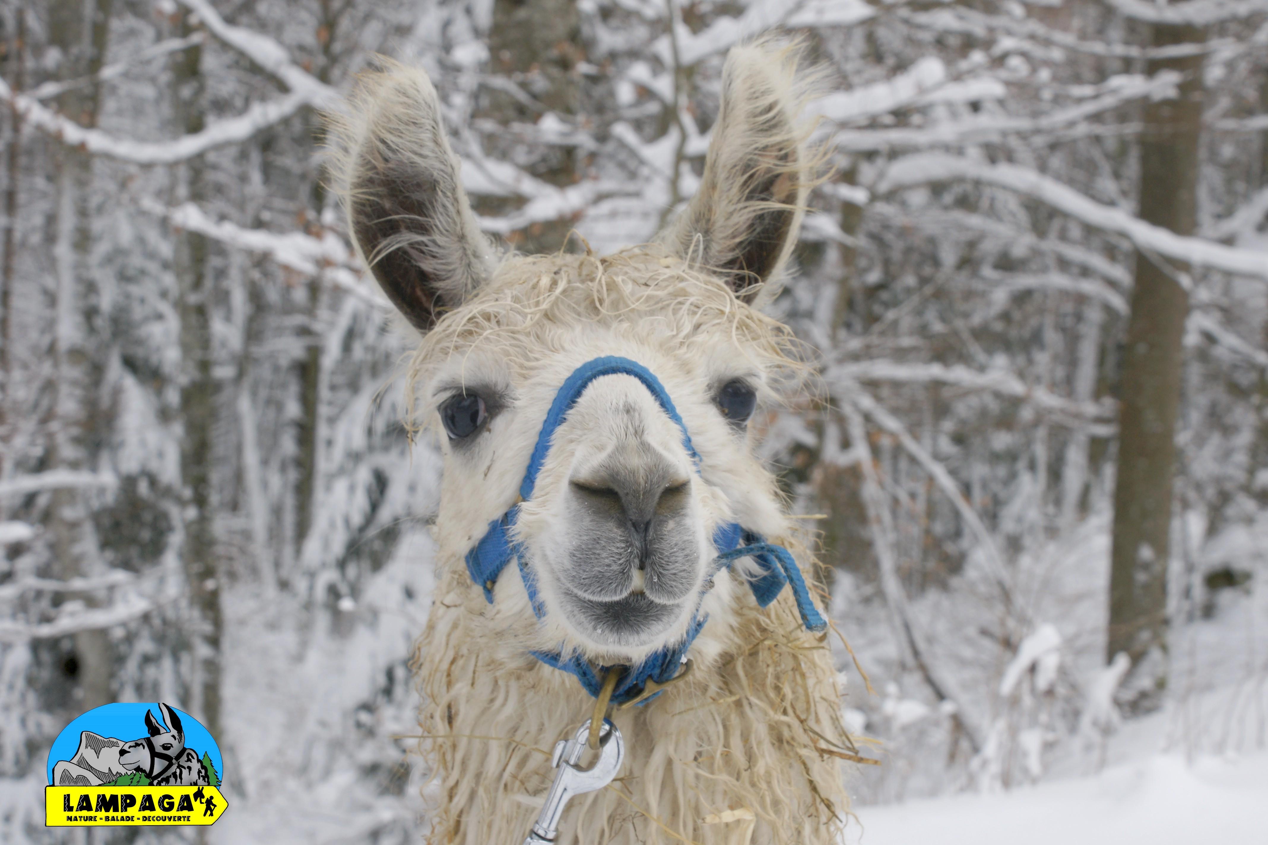 on aime la neige très tôt ici
