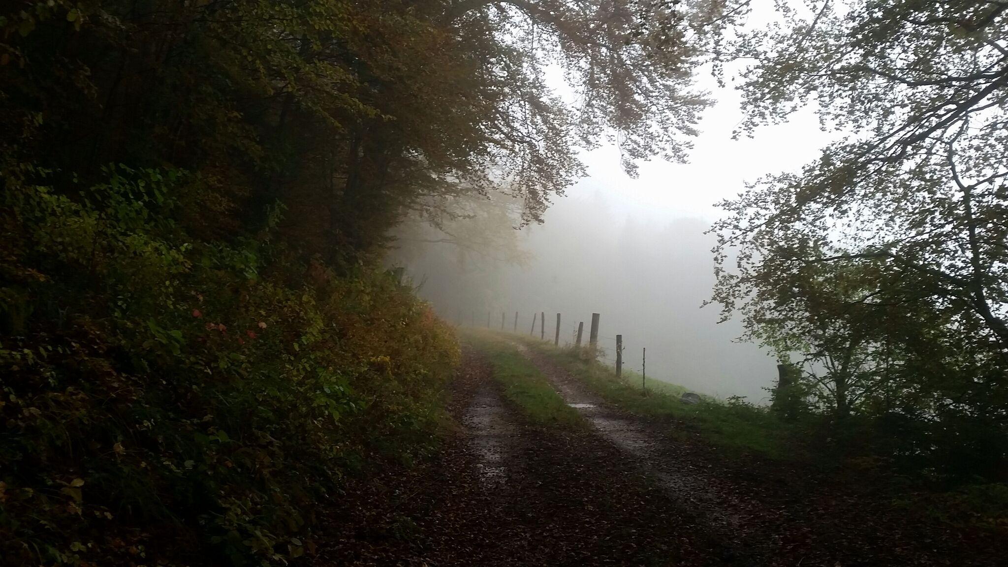Voir le brouillard différemment