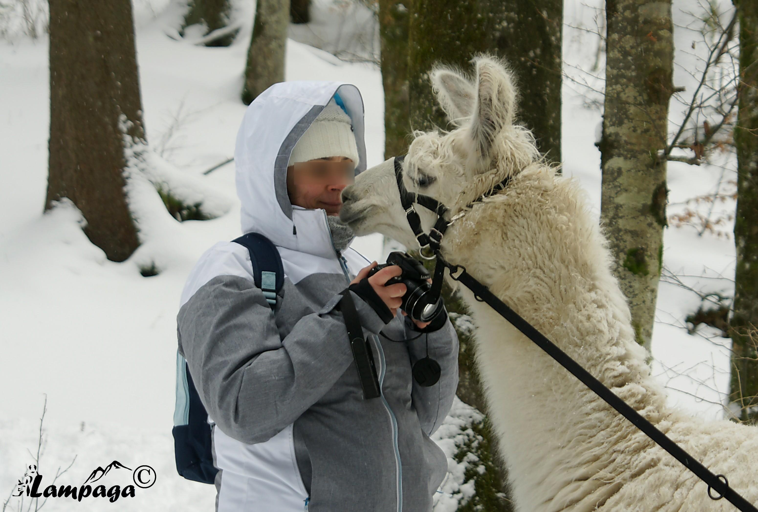 Quand lama fait sa star