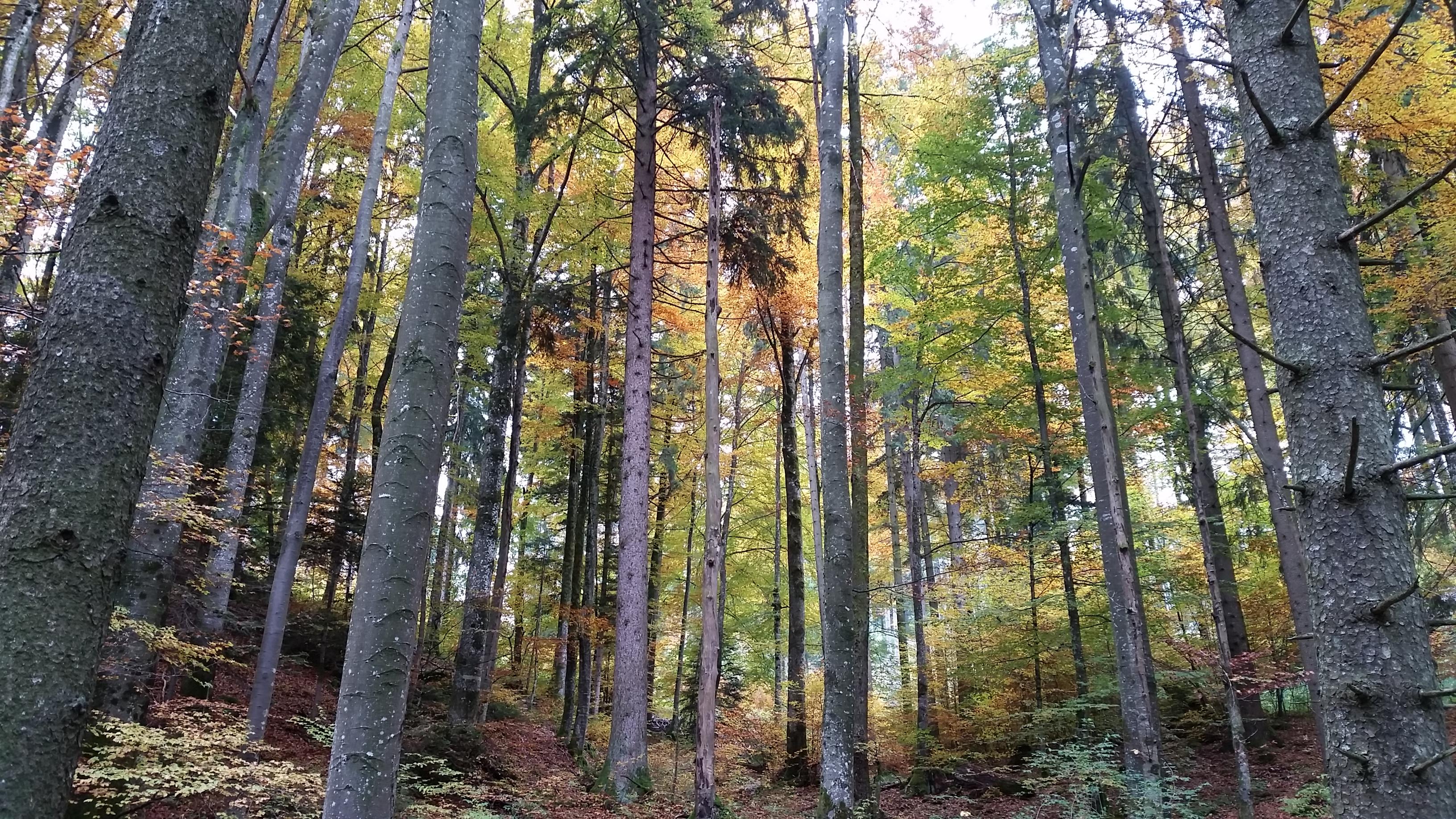 La forêt majestueuse