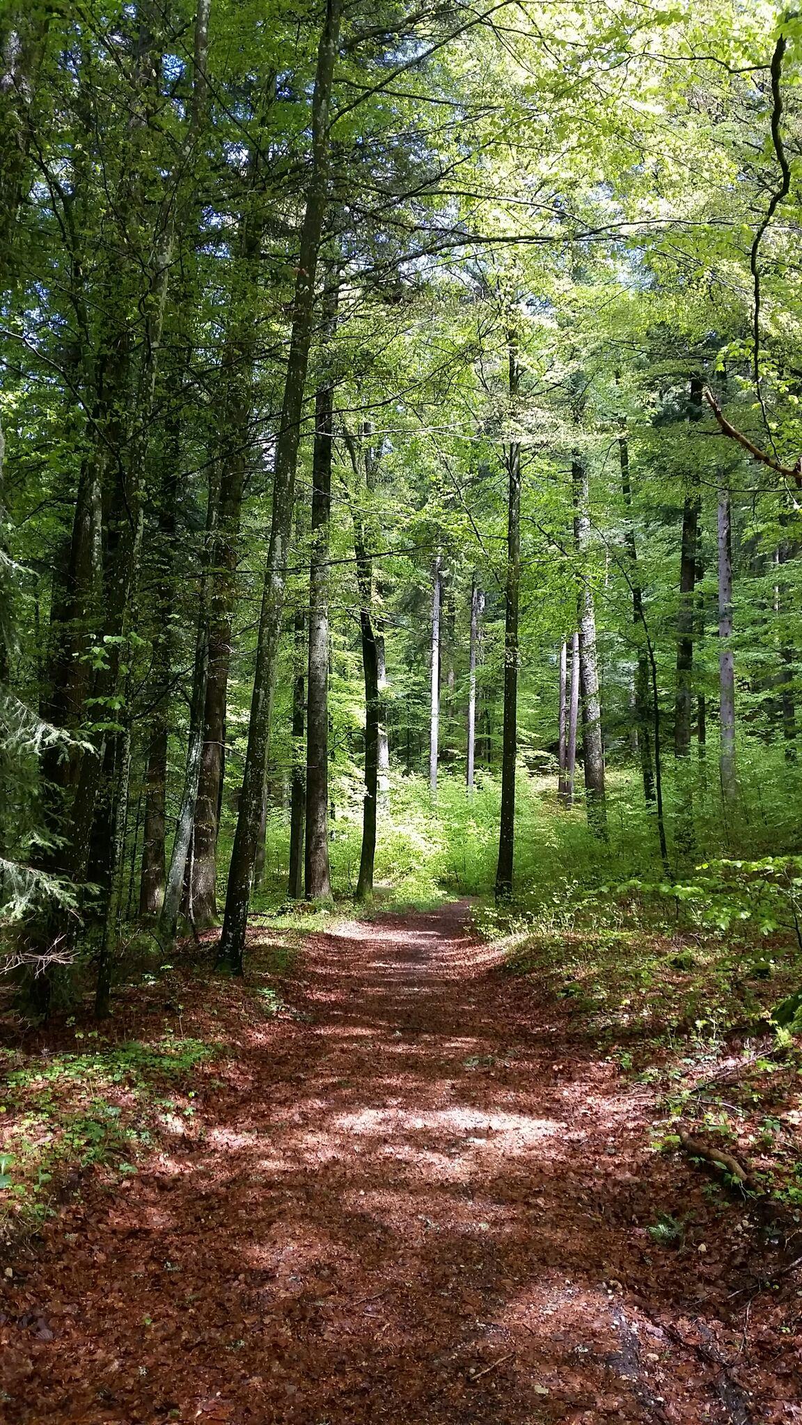 féérie des forêts