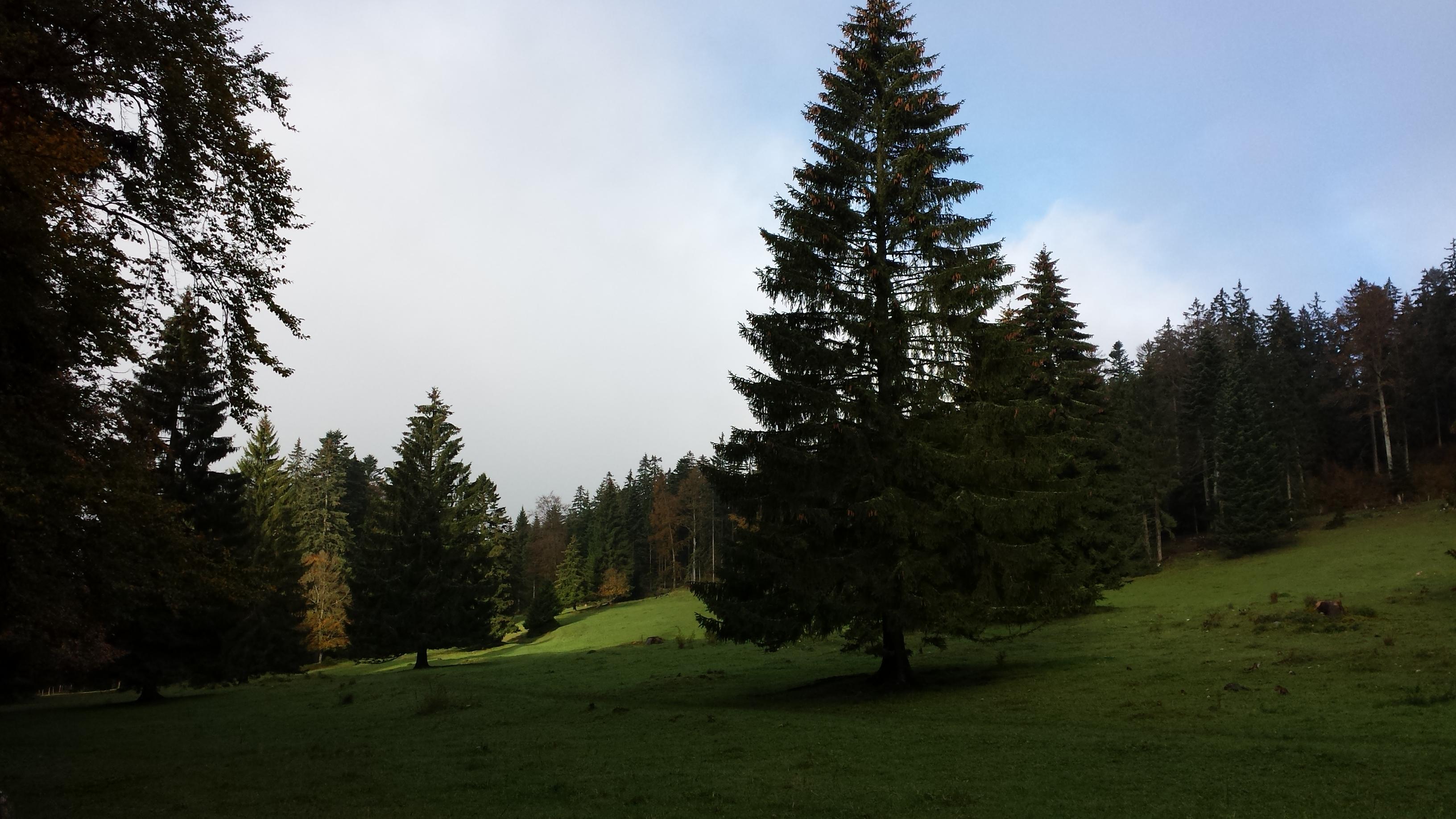 La noblesse des vieux arbres