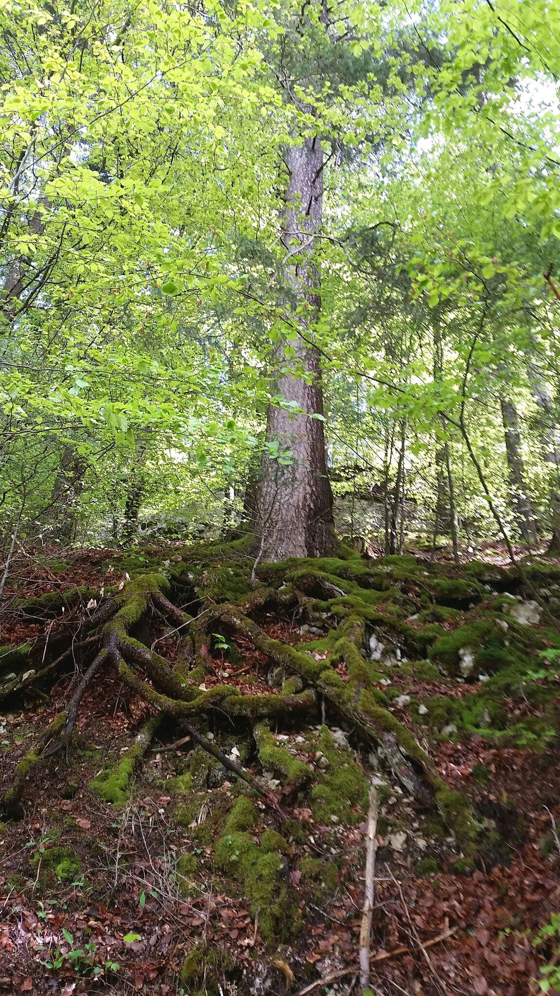La splendeur des arbres