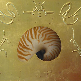 Tiger Nautilus, 13x16.jpg