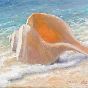 5003_Beach_Shell_aulmja.jpg