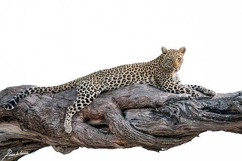 Okavango spots