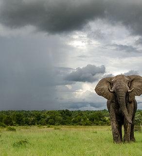 Elephant Storm