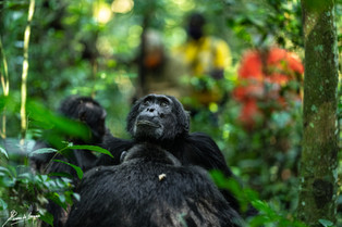 Chimp and people-100561.jpg