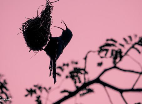 Garden Bird Safari