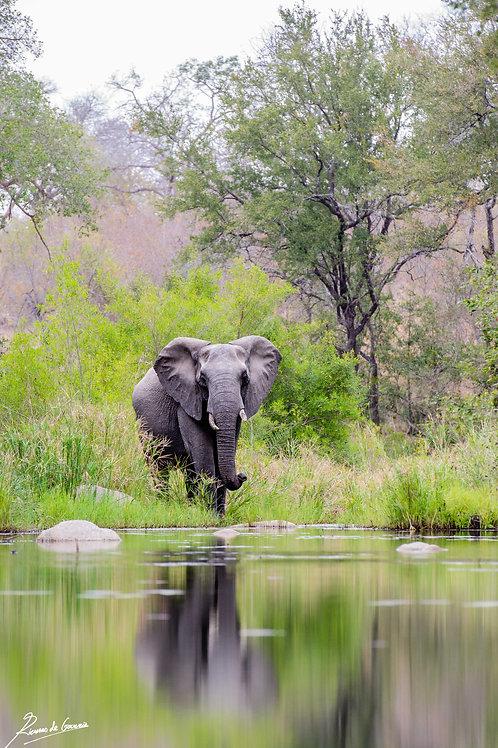 Reflect on elephants