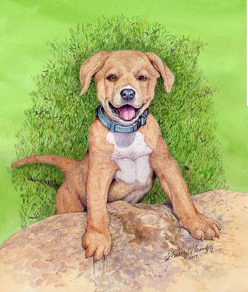 archy puppy.jpg