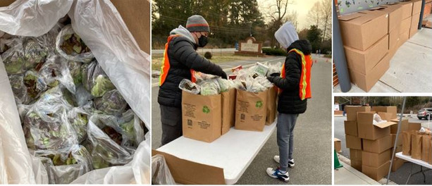 Beautiful fresh lettuce donated by Cornucopia Farms.