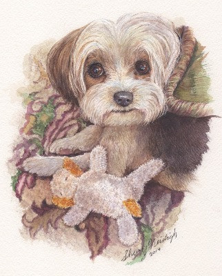 Maltese Watercolor