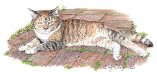 Remi, the cat