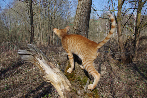 Ориентальный котик