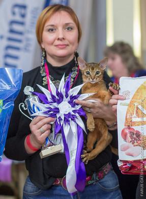 Абиссинсикй котенок на выставке
