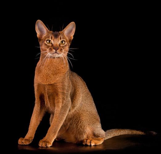 Ёда - кошка ёжка
