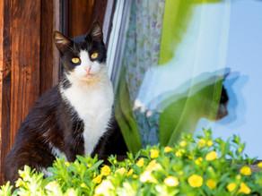 Feline maladaptive pain