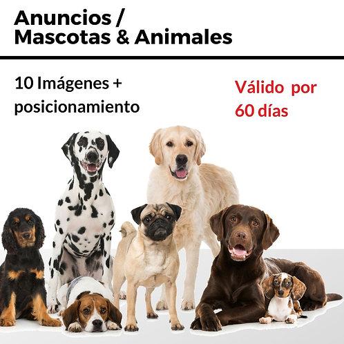 Publicación Mascotas