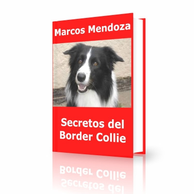 SECRETOS BORDER COLLIE(1).jpg