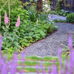 View of path through Lavender