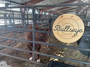 Bullseye in Place 2.jpeg