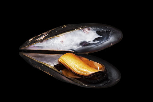 Black Shell Mussels
