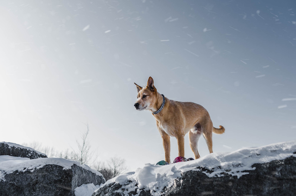 e-com-photo-animaux-pet-commerce-electro