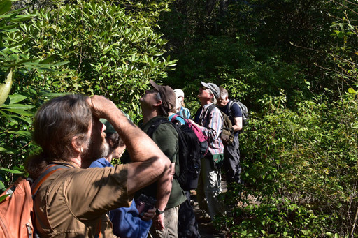 Birding the neotropical arrivals, May'18
