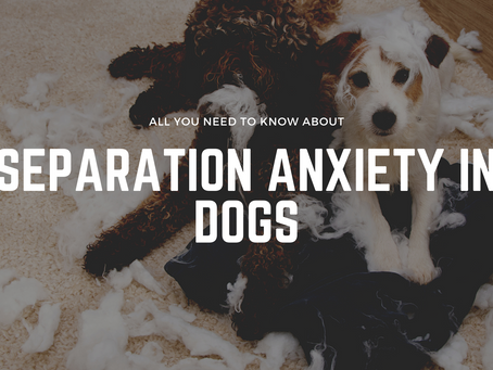 Separation Anxiety in Dogs: Here's Everything You Need to Know About Separation Anxiety in Dogs