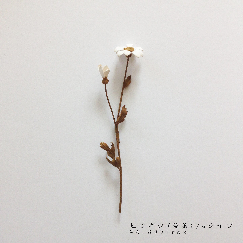 aヒナギク(菊葉).jpg