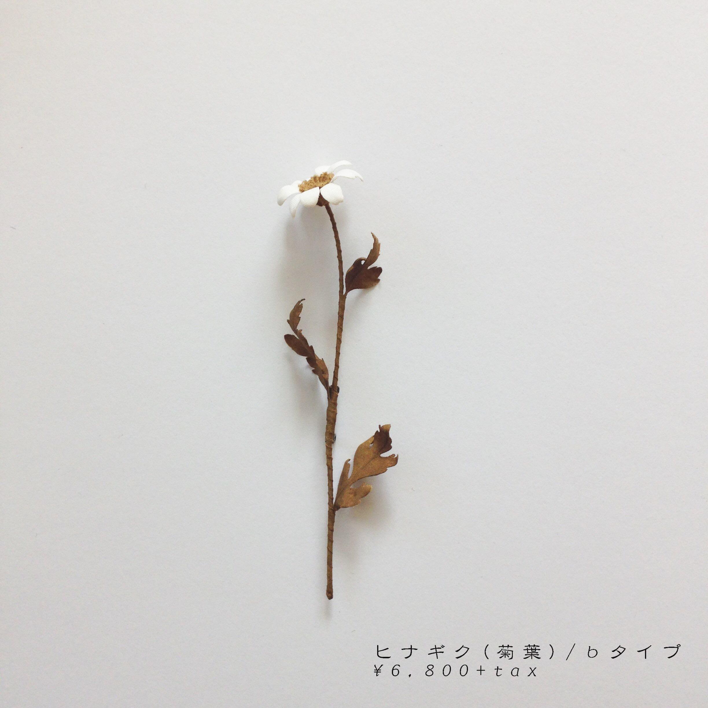 bヒナギク(菊葉).jpg