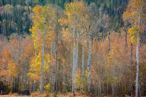 Fall Colors-2.jpg