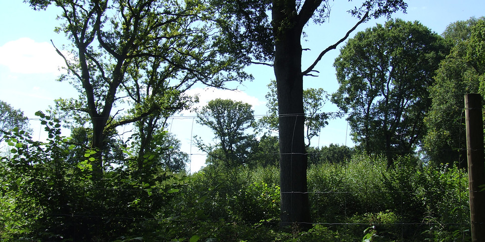 Creating an Ecosystem: The Story of Three Hagges Woodmeadow