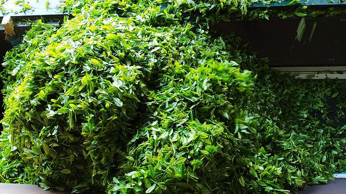 Wholesale Harvest.jpg