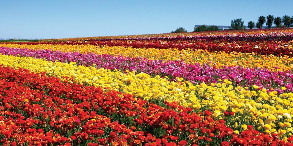 Carlsbad Flower Fields Trip April 13, 2019 10:00am
