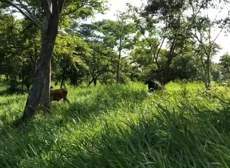 Regenerative Livestock, a sustainable model for Colombia
