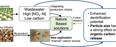 Cork as a sustainable carbon source for nature-based solutions treating hydroponic wastewaters