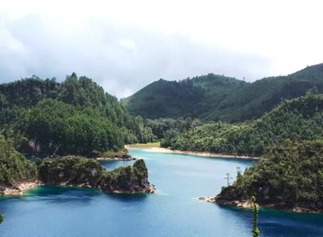 Els boscos poden millorar els serveis ecosistèmics hidrològics?