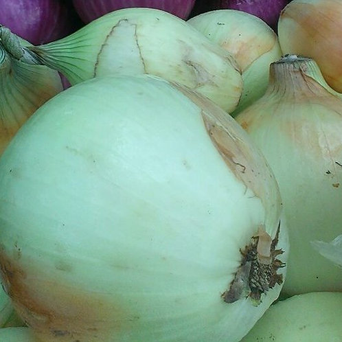 Small Yellow Onion