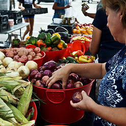 Find Our Produce at 4 locations every week.