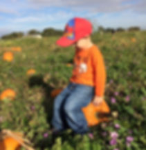 Find the perfect pumpkin in a real pumpki patch