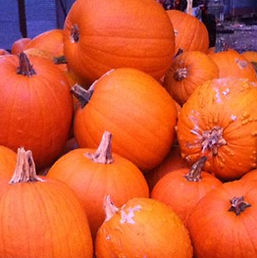 Visit a real pumpkin patch this fall!