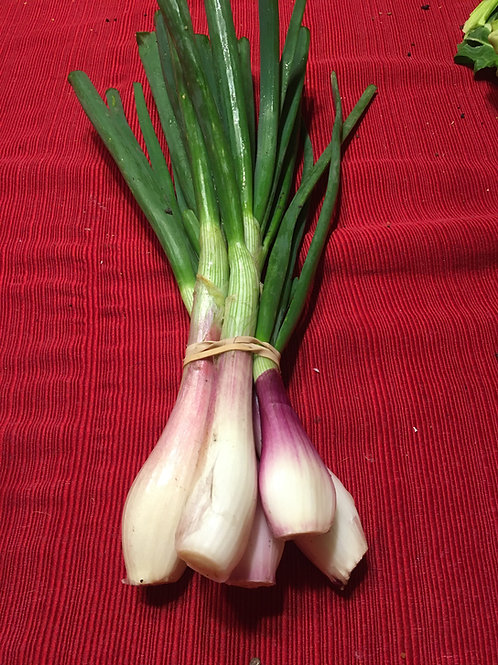 Green Onions (Red)